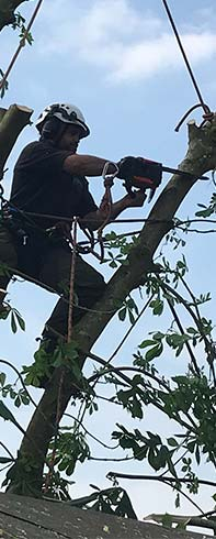 Local tree surgeon cutting a tree