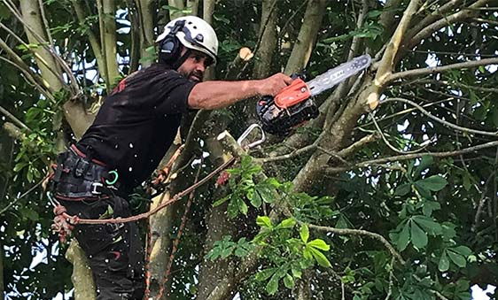 Removing tree branches with a chainsaw
