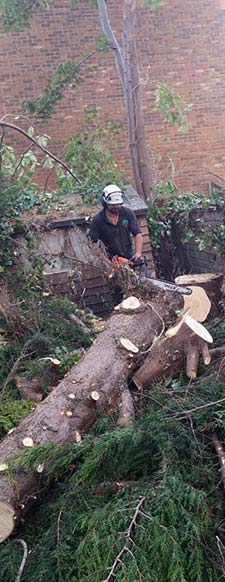 Tree felling and stump grinding